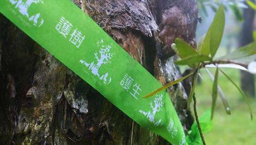 護樹志工為老樹繫上祈福綠絲帶