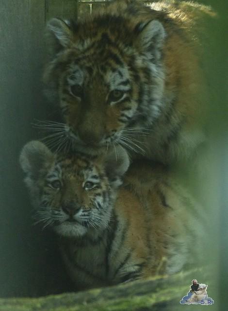 Zoo Eberswalde 22.03.2015   215