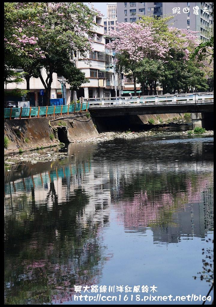 興大路綠川洋紅風鈴木DSC_2323