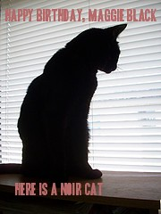 Maggie Black's Birthday Cat