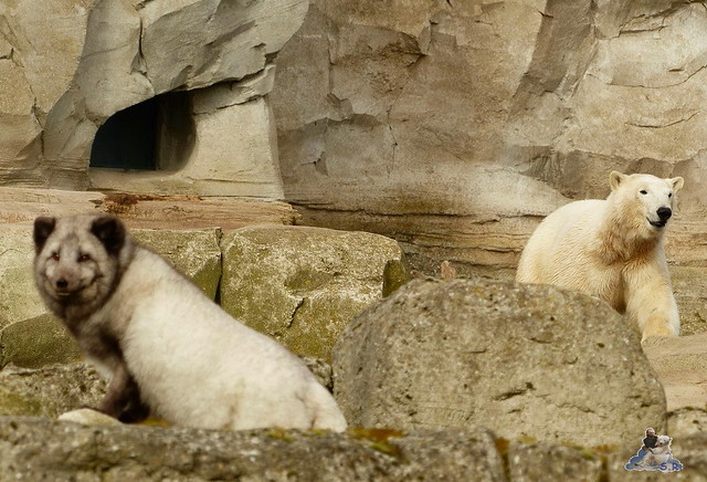 Zoo am Meer 07.03.2015   124