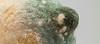 Pilz by phobospics