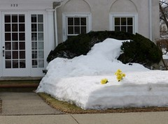 Artificial flowers in snow bank