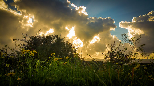 sunset sky flower green field clouds