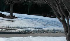 Snow (Street Photography)