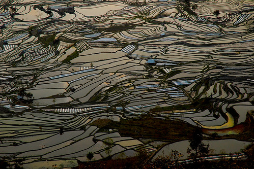 china light sunset water de landscape soleil asia eau geometry coucher asie yunnan paysage ricefields mosaique chine riceterrace végétation lumiére graphisme graphism géometrie yuanyuang riziéres riziéresenterrasse