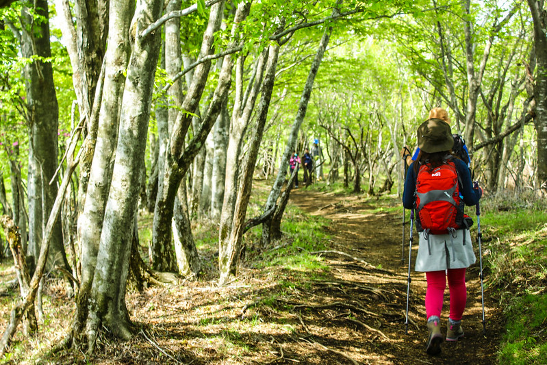 新緑の鍋割山の登山道