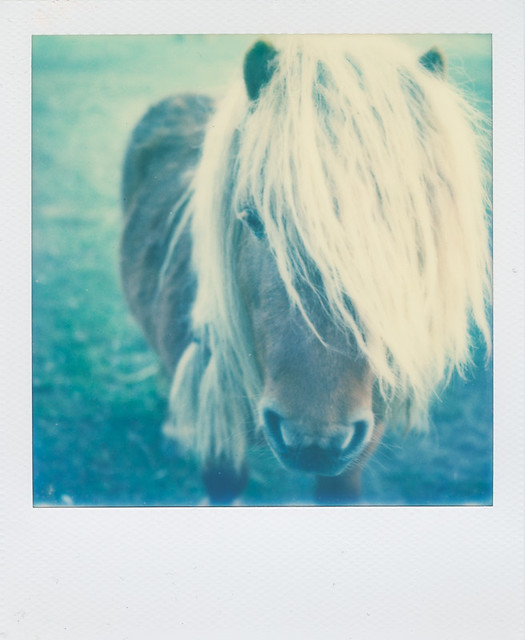 Pony - Copyright © 2015 Marcin Michalak Photography.