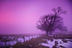 In the pink fog