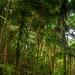 Palo Colorado Rainforest