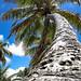 Cocopalm - texture - #cocopalm #cellularphone #phone #texture #cocopalmtree #salvador #bahia #brazil #fortbeach #beach