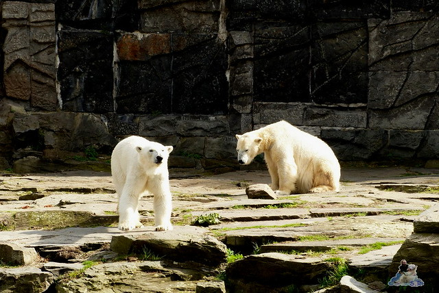 Tierpark Berlin 12.04.2015 267