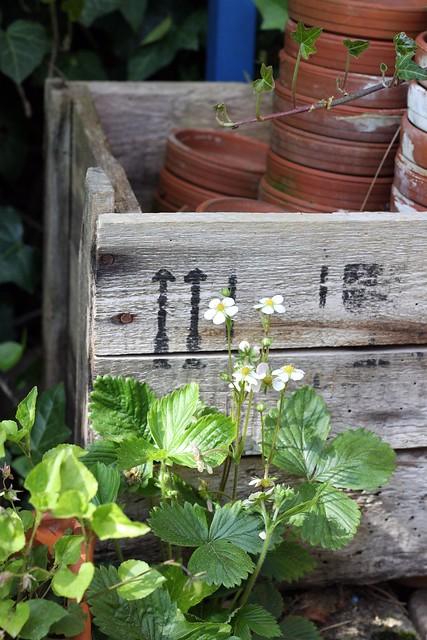 Gardening box I