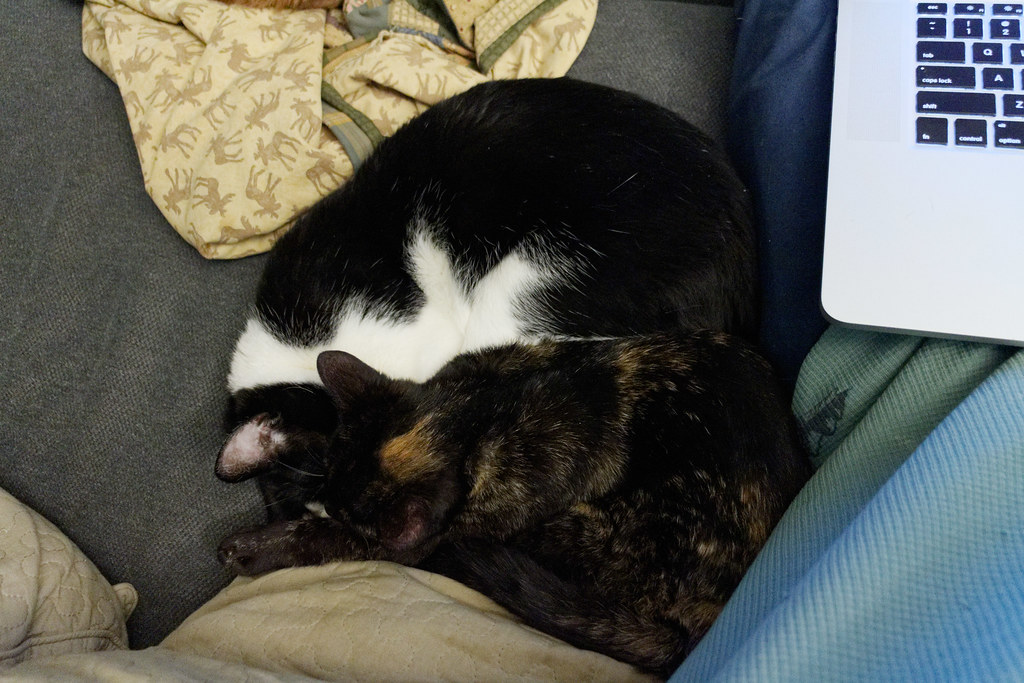 Our tortoiseshell kitten Trixie sleeps on top of our black-and-white cat Boo