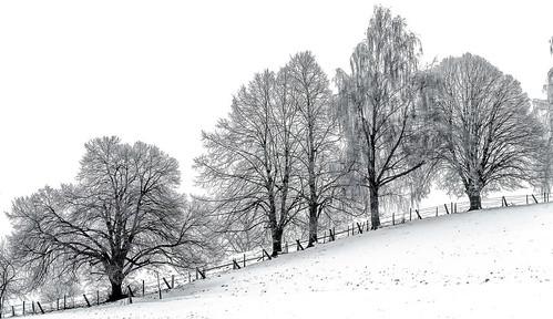 """Bäume im """"Winterschlaf"""""""