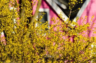 Spring views-2489