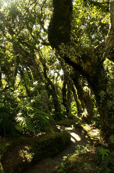 Mt Taranaki path & bush from Dawson Falls side 23 1 15 K54871 600