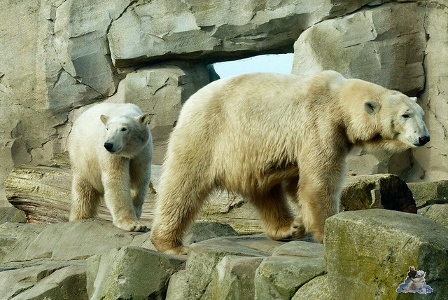 Zoo am Meer 07.03.2015   4