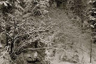 Giochi di neve