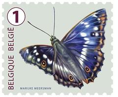 19bis f Kleine weerschijnvlinder