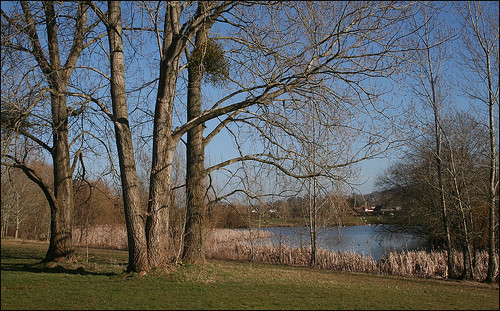 Lake and Trees: Backwell