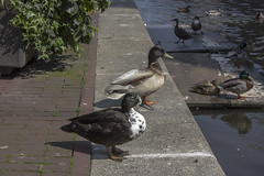 NEDERLAND - Amsterdam 036