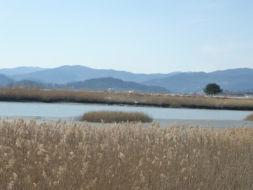 Co-Suncheon-Parc ecologique (15)
