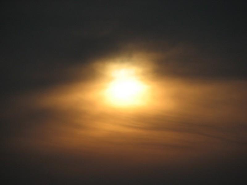 Sun In Brown