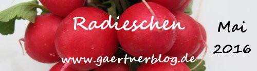 Garten-Koch-Event Mai: Radieschen [01.05.-31.05.2016]
