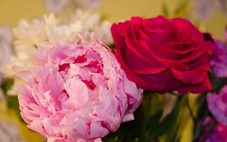 Peony and Rose