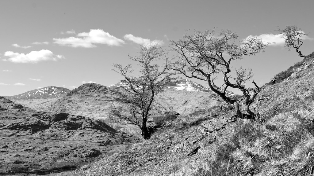 Trees above Glen Falloch