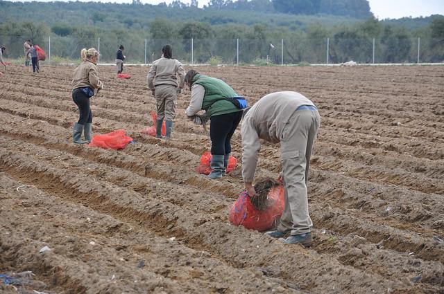 AionSur 16696434970_917a04effe_z_d La finca El Alabardero vuelve a estar operativa con la plantación de espárragos y viñas Empresas Formación y Empleo