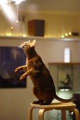Chasing a fly (4)