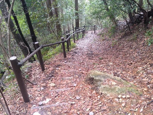 清滝山 登山道 偽木階段
