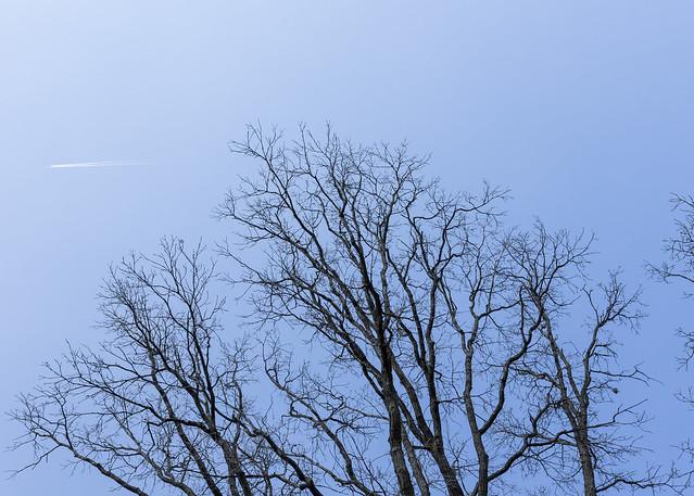 Signal Tree Study #2