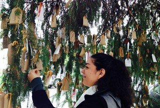 Wishing Tree1