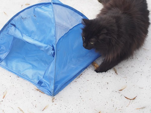 kit tent