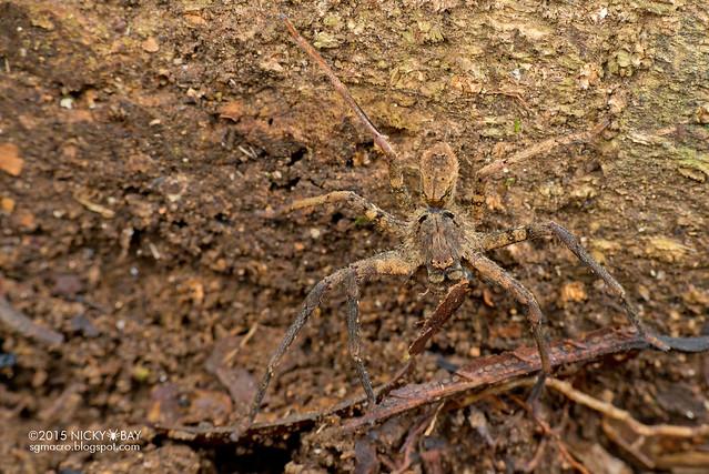 Huntsman spider (Sparassidae) - DSC_5219