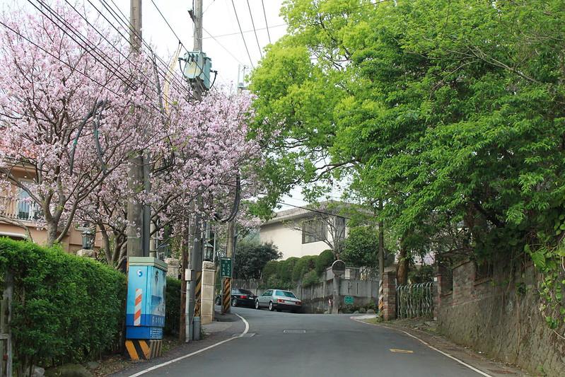 17度C在地景點春季推薦-東方室-櫻花 (23)
