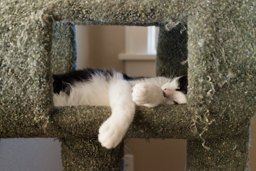 Our cat Boo sleeping in the cat tree
