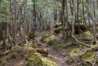 苔むした樹林帯の山道