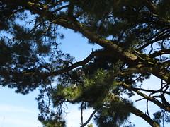 Branches - Photo of Ménéac