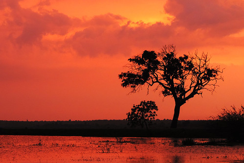 travel blue trees sunset red sky cloud lake plant colour tree water field clouds landscape asia purple bright outdoor dusk wetlands serene srilanka ceylon uva grasslands southasia uvaprovince weerawilalake