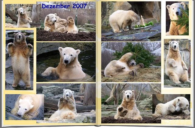 2007_12 Eisbär Knut