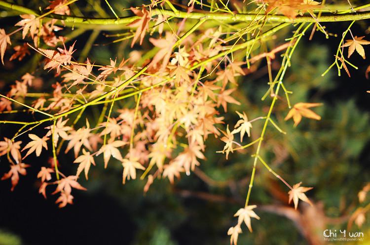嵐山寶嚴24.jpg