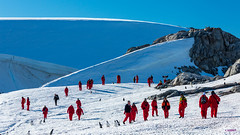 """Red Penguin"" @ Petermann Island, Antarctica"