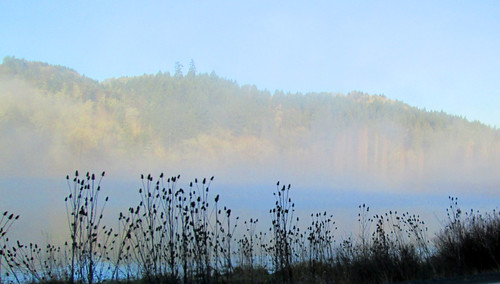 Love the morning fog on the wetlands