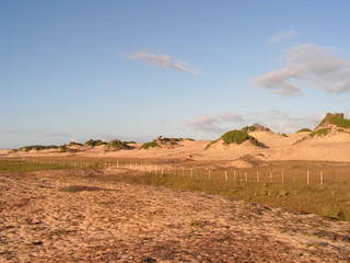 Restinga, moitas nas dunas