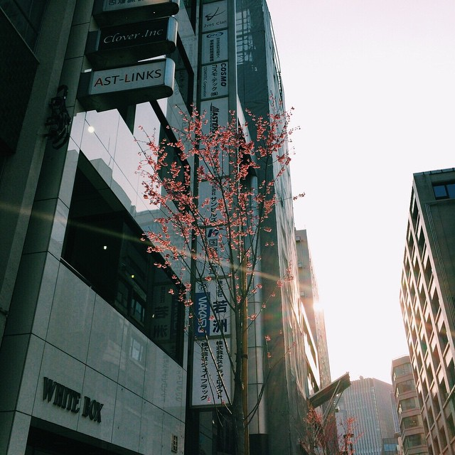 会社の近くに咲いてた。 #桜 #おかめ桜