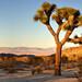Joshua Tree National Park by Kathy~